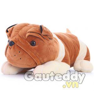 Chó Mặt Xệ - gauteddy.vn