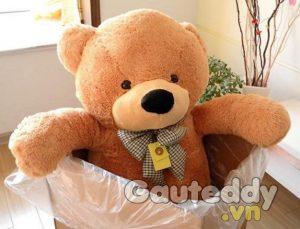 banner gấu bông
