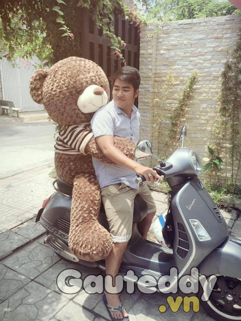 Gấu Bông Teddy 1m8