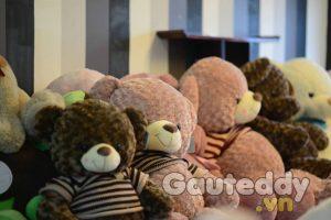 Gấu Bông Nhập Khẩu - gauteddy.vn