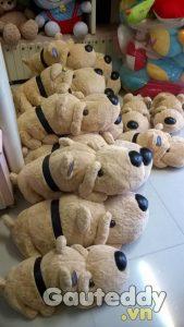 Chó Đai Đen - gauteddy.vn