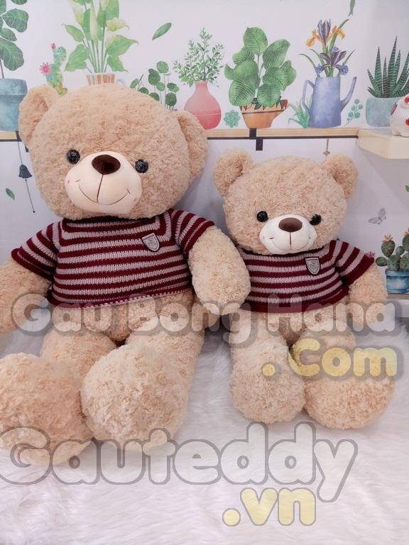 Gấu Teddy Choco