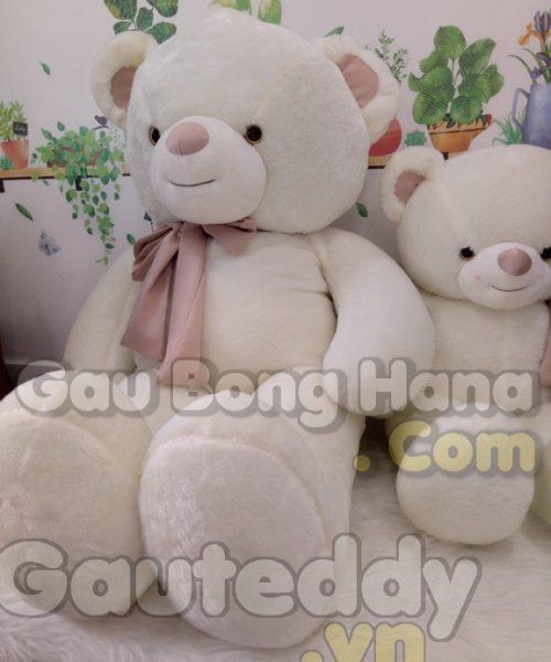 Gấu Teddy Trắng Khăn Choàng
