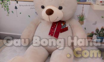 Gấu Teddy GEM Trắng