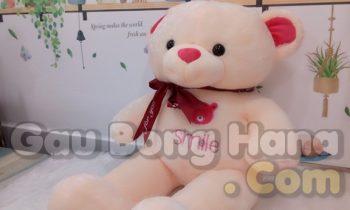 Gấu Teddy Smile