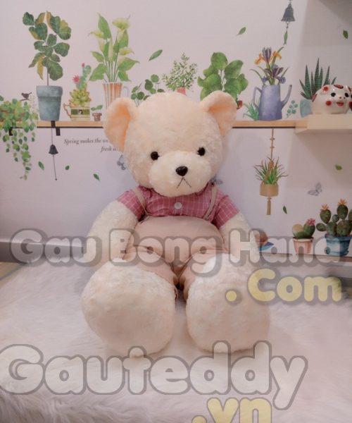 Gấu Teddy Vintage