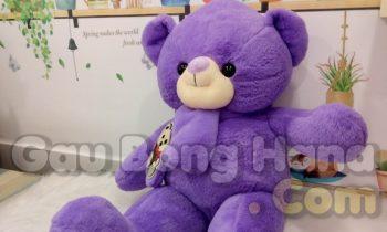 Gấu Teddy Khăn Choàng Tím