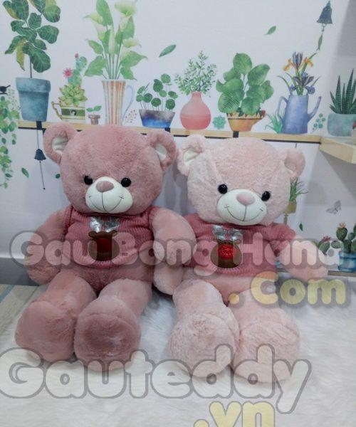 Gấu Teddy Mie