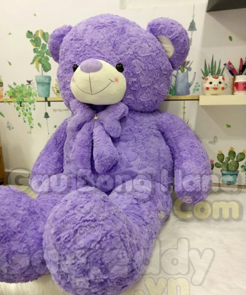 Gấu Teddy Purple