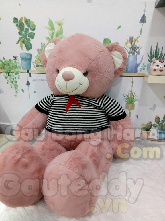 Gấu Teddy Sun Sọc Đen