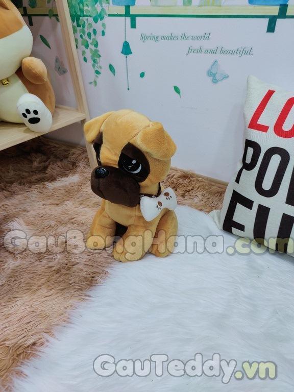 Chó Bông Phèn