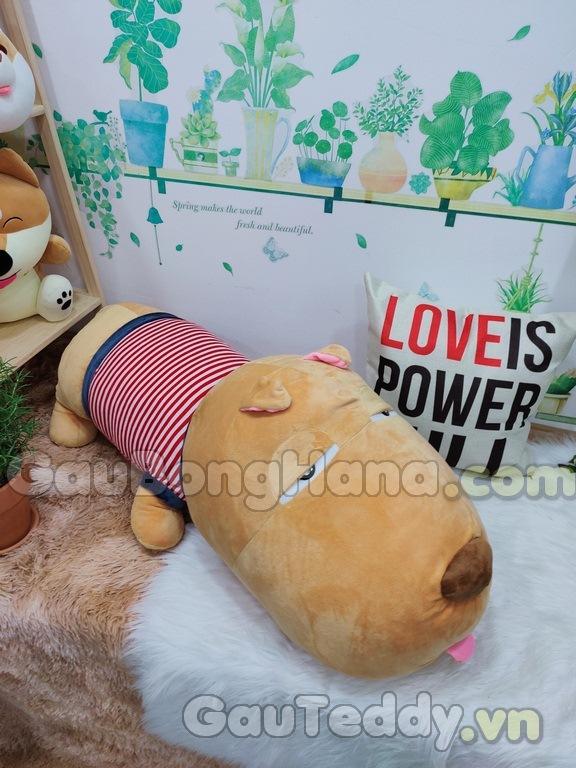 Chó Puco Áo Sọc