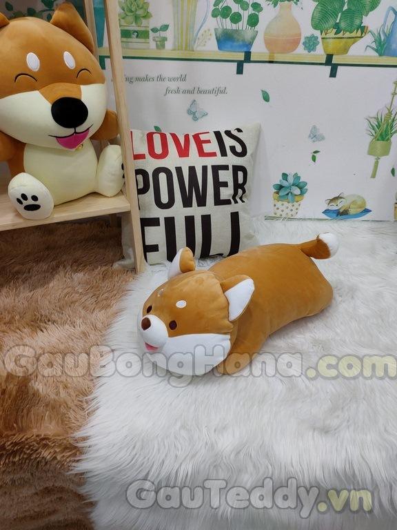 Chó Shiba Nằm
