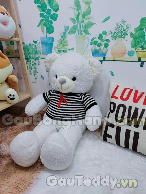 Teddy Loving U Áo Sọc