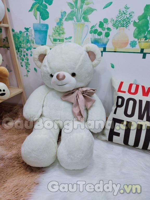 Gấu Bông Teddy Trắng Khăn Choàng