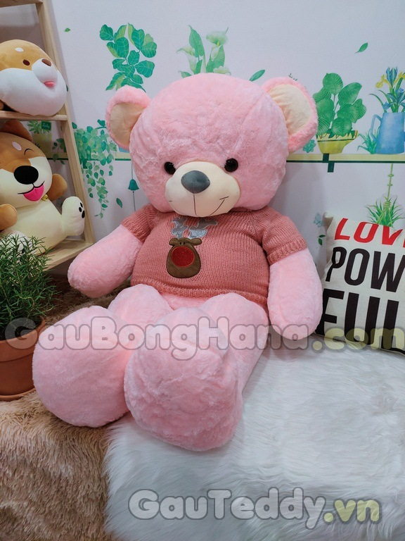 Teddy Pink Áo Hồng