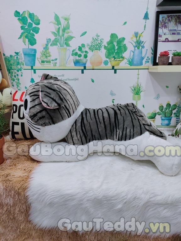 Mèo Chii Bông