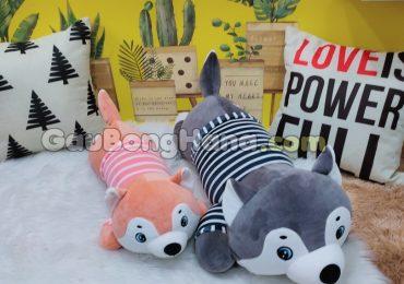 Chó Bông Husky Happy