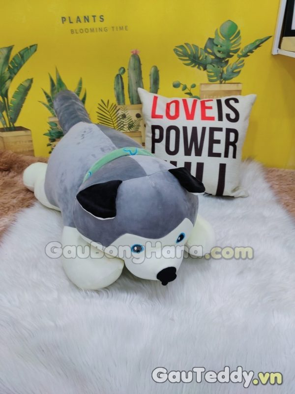 Chó Husky Xám
